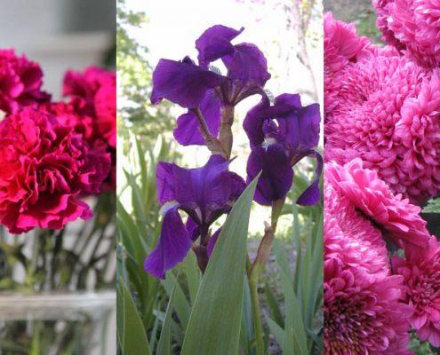 flores-todos-los-santos-ancha