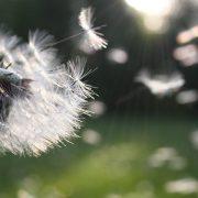 alergias-em-primavera