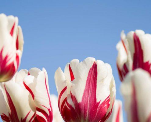 flores-para-funerales